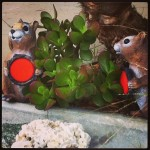 Lauren's Squirrels