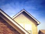 Tonya's Birds