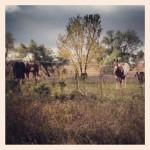 Theresa's Horses