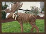 Deborah's Antlers